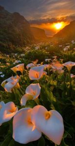 sunset in the mountains with flowers